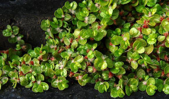 Slaapkamergeluk Plant ~ ConSEnzA for .